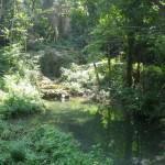 Krka's Forest
