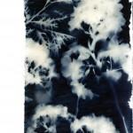 cyanotype_flowers