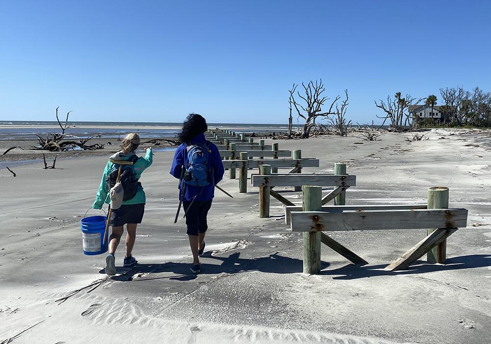 pritchards island sea turtle volunteers
